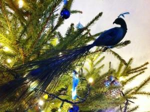 TK Maxx peacock