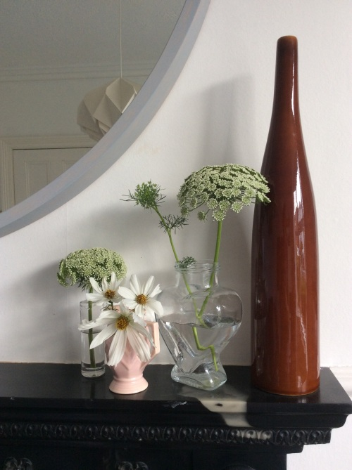 Cosmos and ammi visnaga from the cutting patch